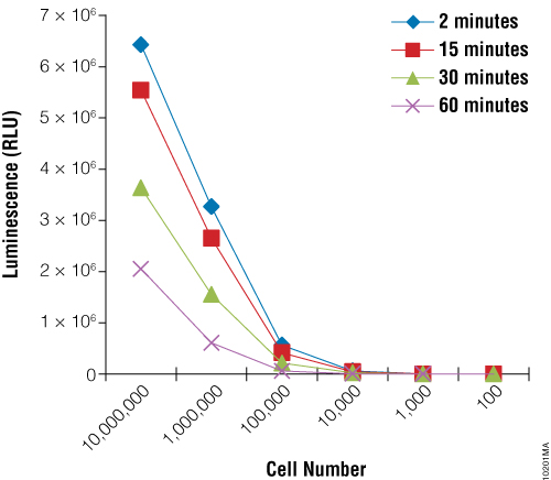 Luminescence as measured by BacTiter-Glo™ Assay correlates with cell number for R. rubra cells.