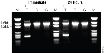 Comparison of PCR products when reactions are cycled immediately after assembly or left at room temperature for 24 hours before cycling.