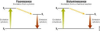 Excitation and emission schema for fluorescence and bioluminescence.