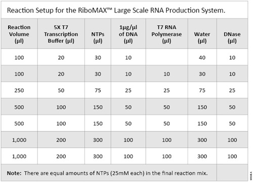 Reaction Setup for the RiboMAX™ Large Scale RNA Production System.